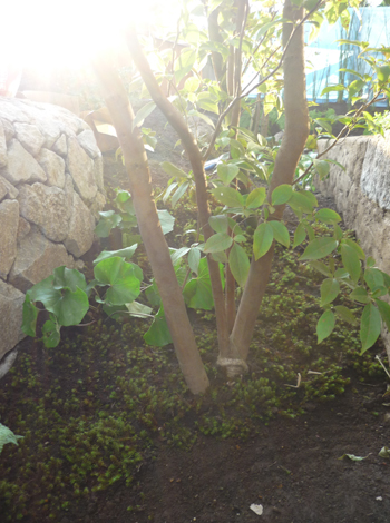 gardens_koubou_15